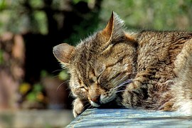 cat-590684__180.jpg