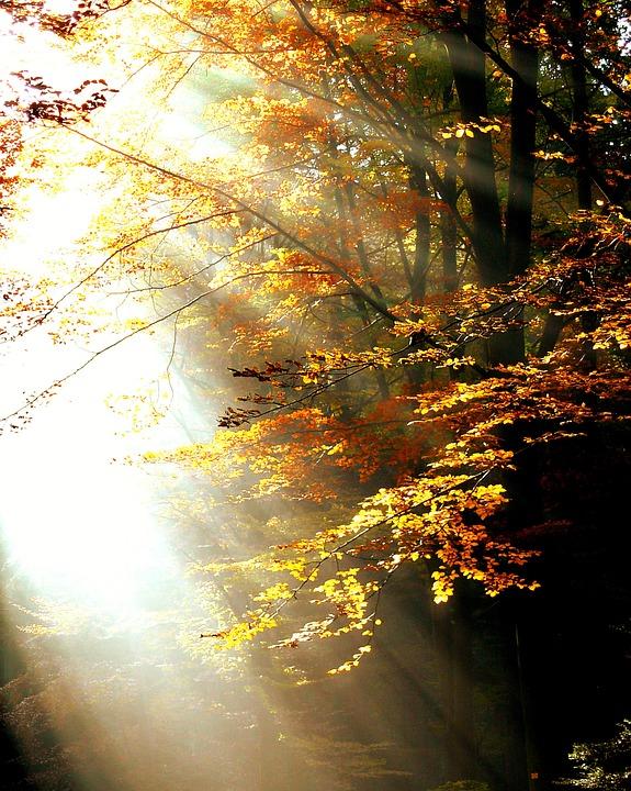 forest-411491_960_720.jpg