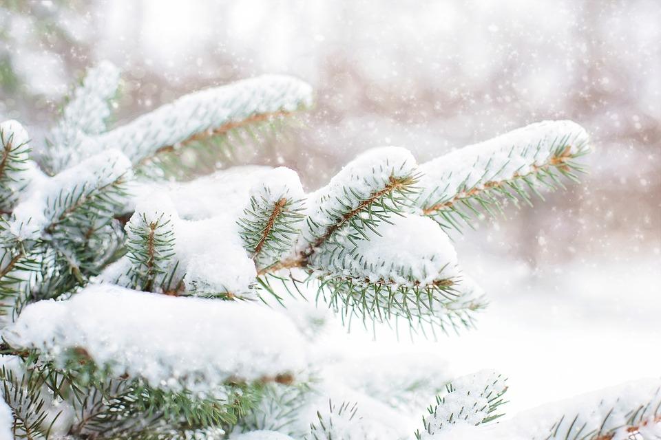 snow-in-pine-tree-1265119_960_720.jpg