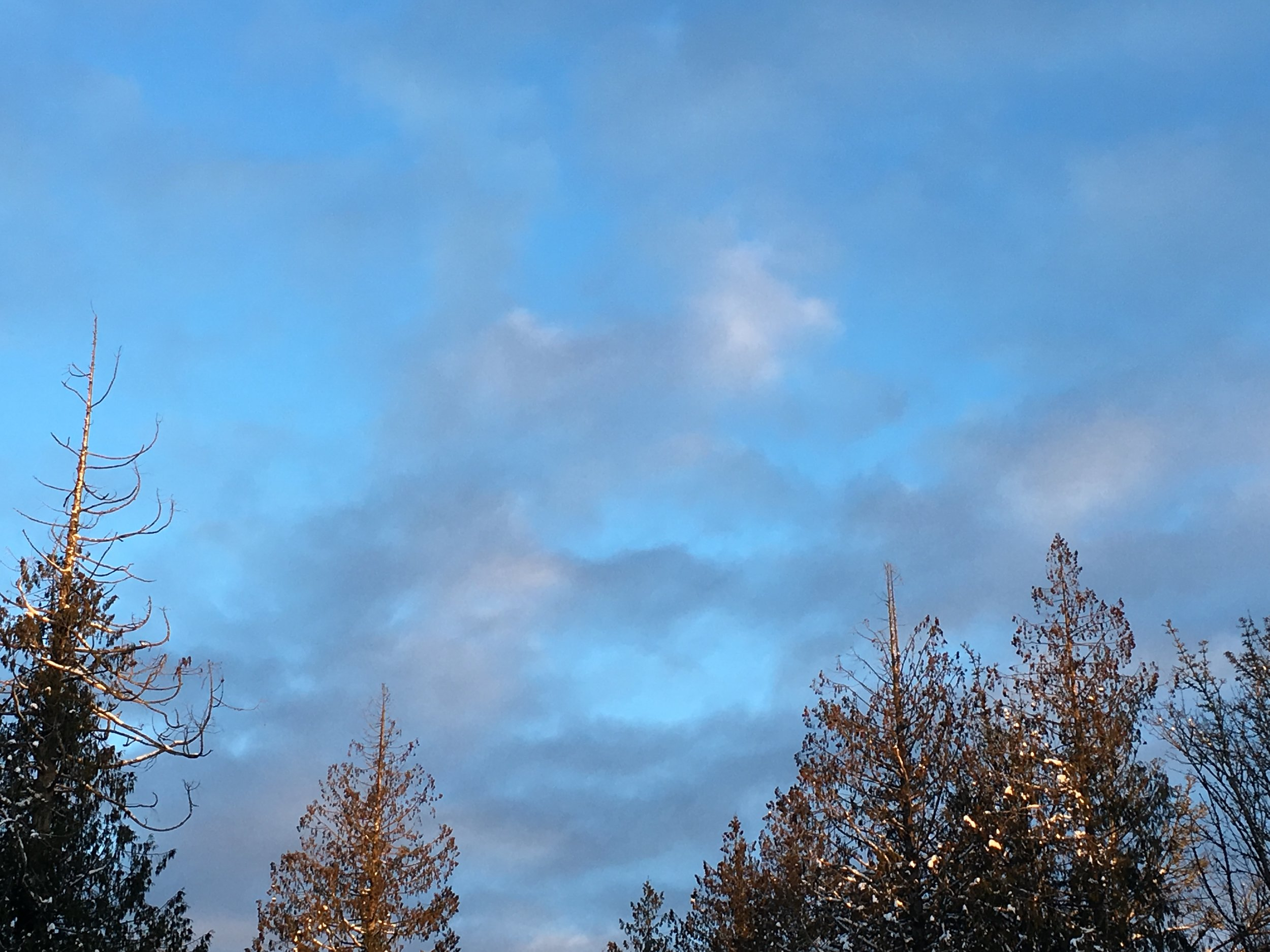 treetops and blue sky with light clouds