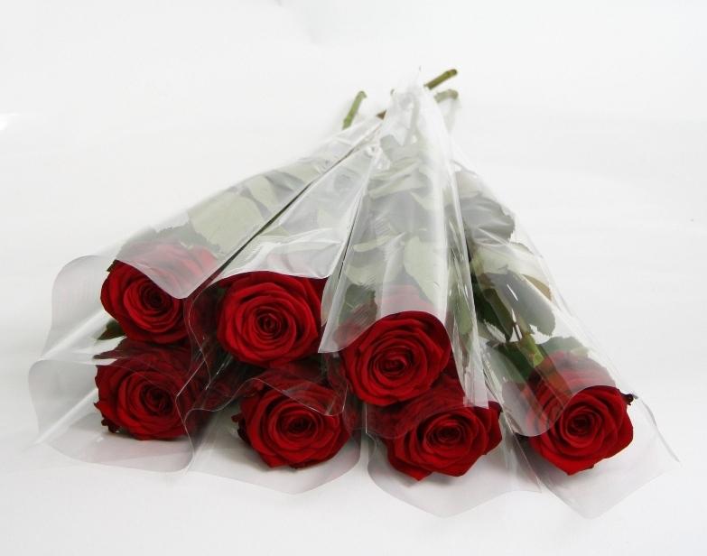 single sleeved red roses.jpg