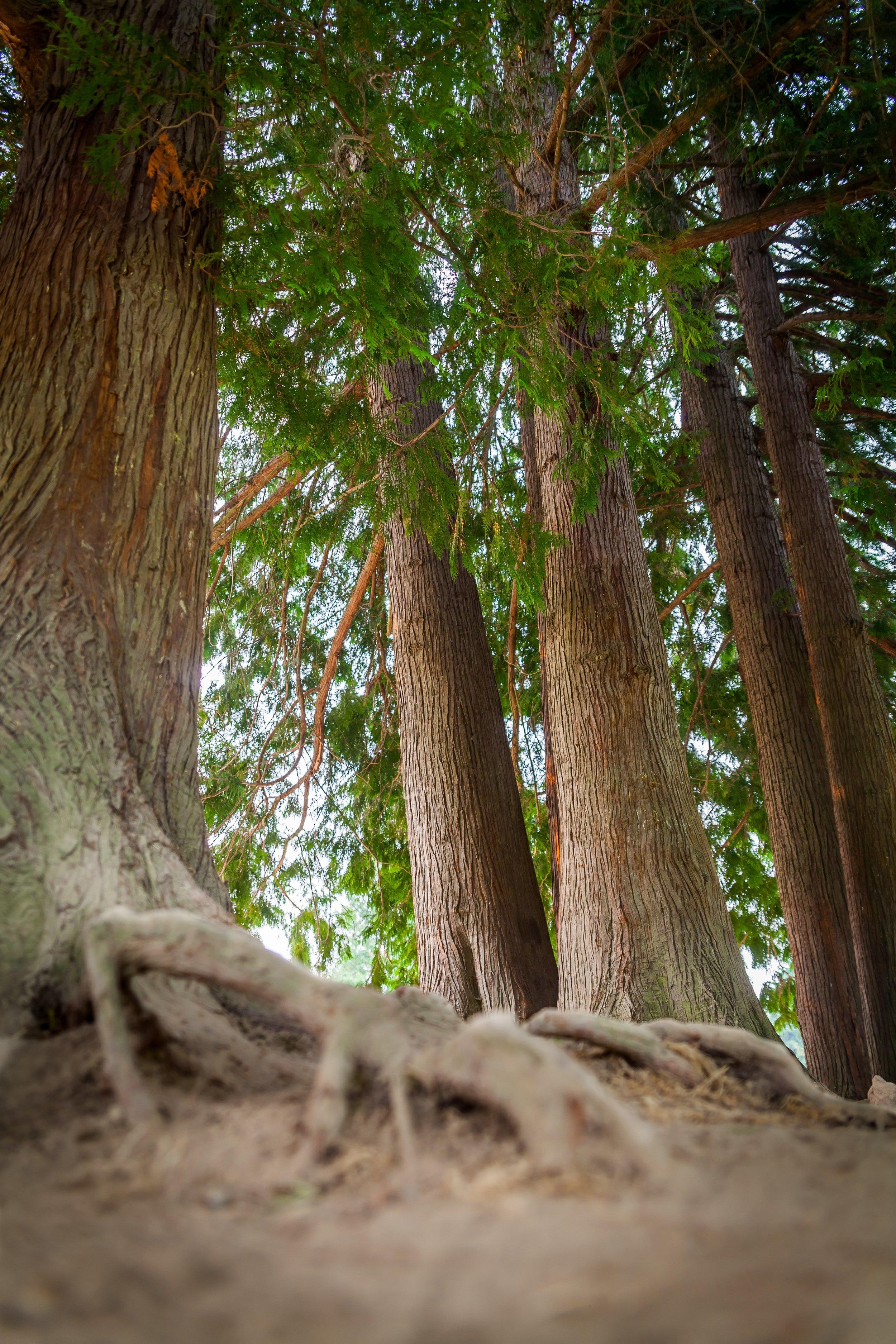 CrestwoodsPark20.jpg