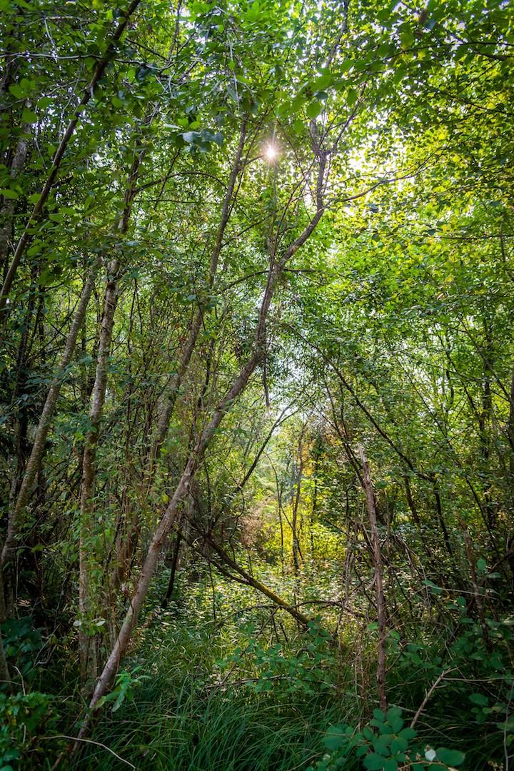 WoodlandsPark3.jpg