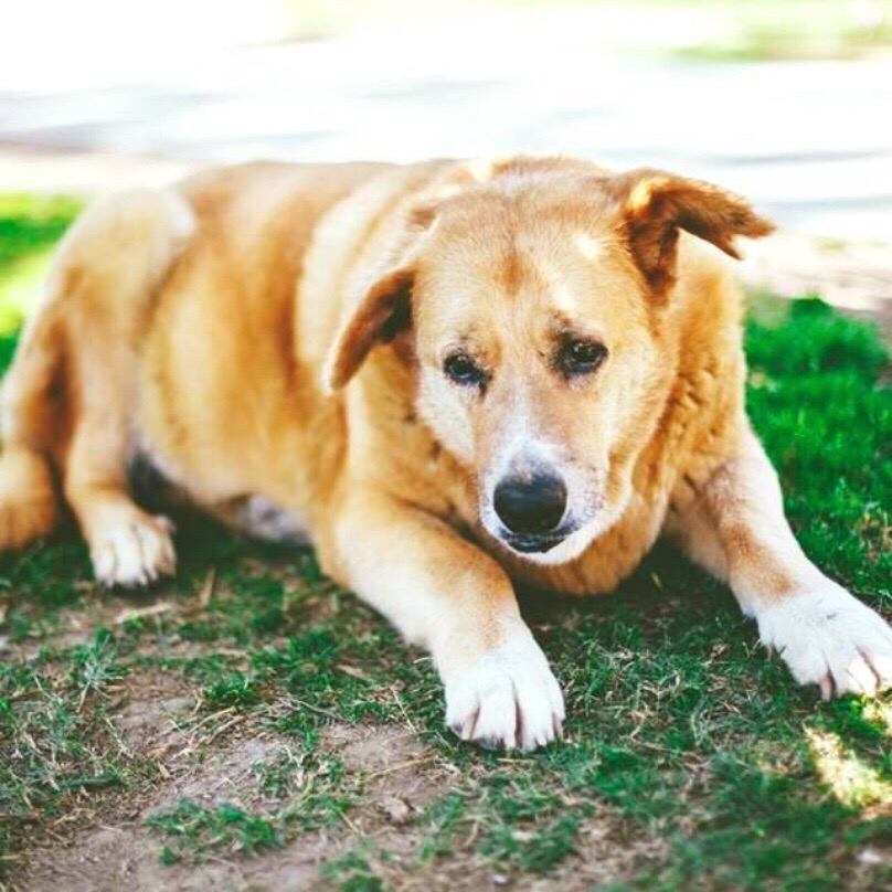 Paying Tribute to all our farm dogs - August 26th is National Dog Day!