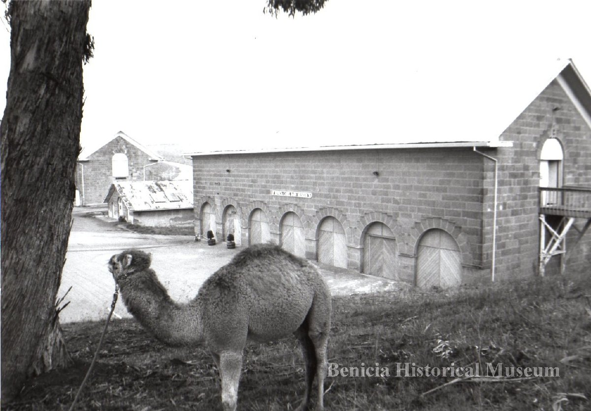 Camel Barns at the Arsenal  Photo: Benicia Historical Museum