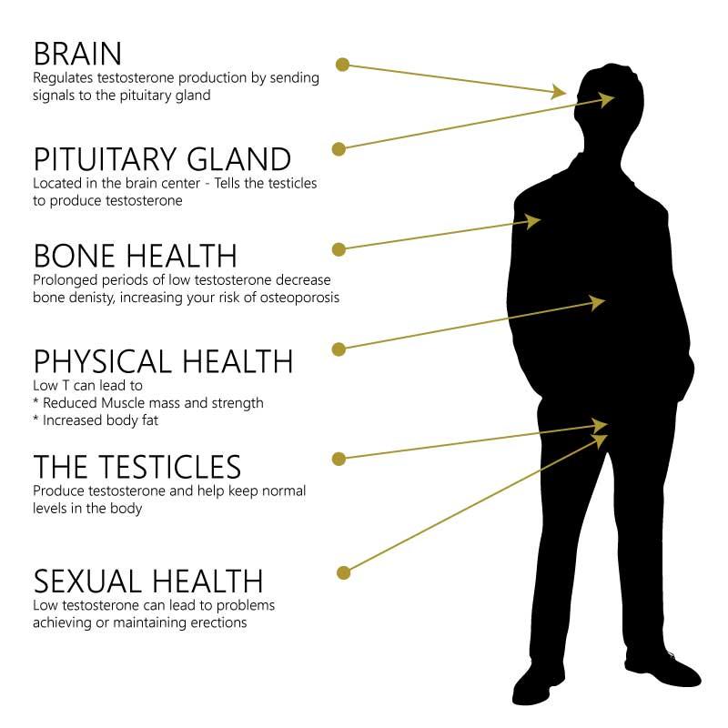 Testosterone Health