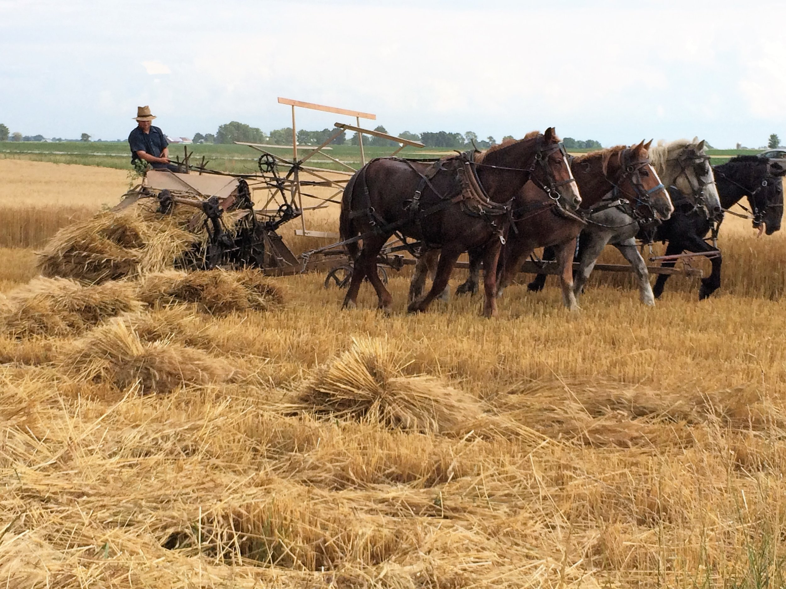 The binder ties the wheat into sheaves.