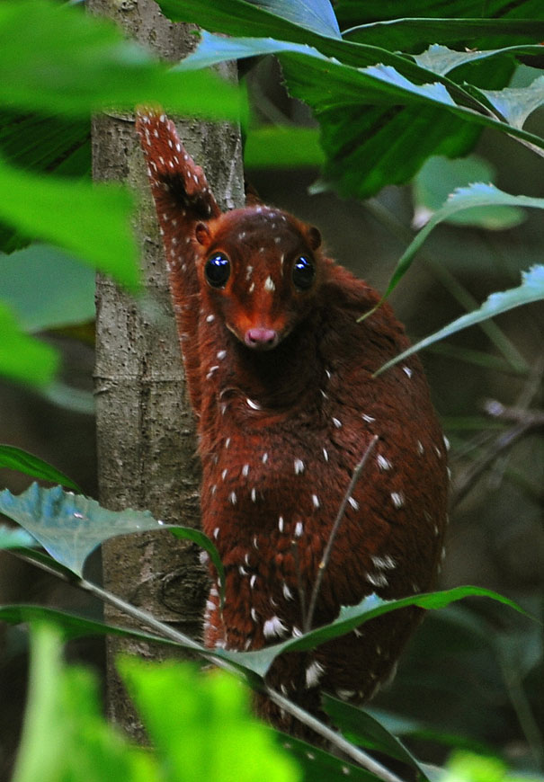 Photo by  http://identi.info/imagenes/94722582/Curiosos-Animales-Raros-Pero-Bellos.html