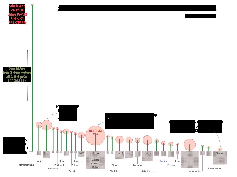 Infographic về sản lượng cà chua. Sản lượng nông sản của Hà Lan so với thế giới