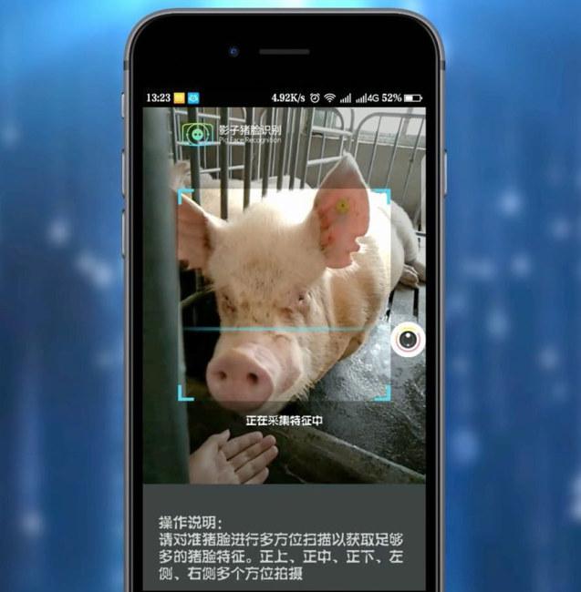 Yingzi Technology dùng video để thu hình ảnh mặt lợn vì chúng di chuyển liên tục. Ảnh: Yingzi Technology.
