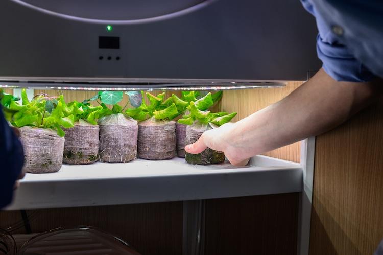 Bạn có thể đặt hạt giống vào ngăn tủ dưới của thiết bị, và chờ đợi hạt nảy mầm thành cây sau 3 tuần