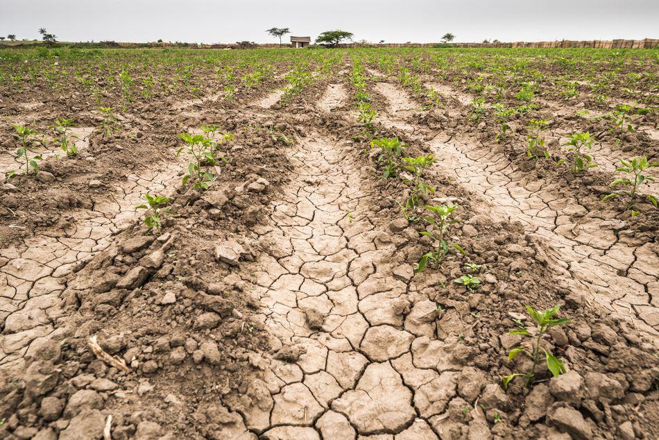 arid-crop-5a1256f413f129003779207b.jpg