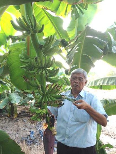 """Mô hình trồng chuối công nghệ cao của ông Võ Quan Huy-người được mệnh danh là """"siêu"""" nông dân được tỉnh Long An xem là mô hình điểm."""