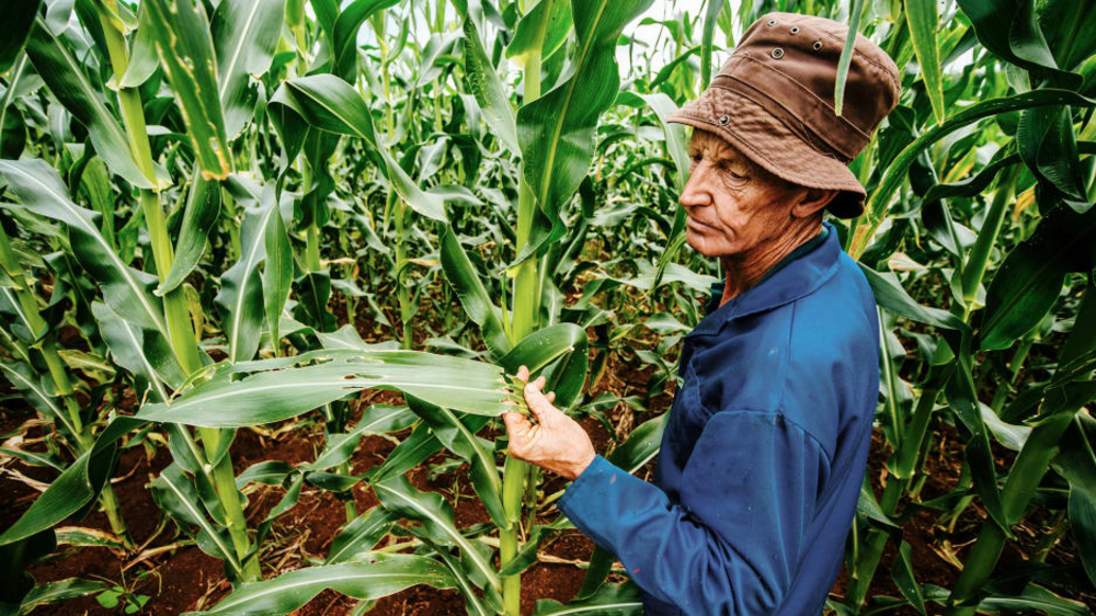 p-1-machine-learning-helps-small-farmers-identify-plant-pets-and-diseases.jpg