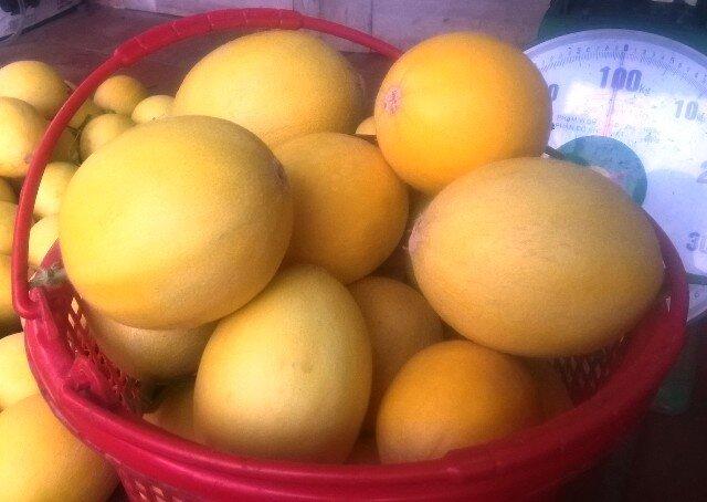 Ngắm những trái dưa vàng đẹp như trong như phim đã thôi thúc Khoa quyết tâm xây dựng mô hình trồng dưa vàng CNC trên mảnh đất khó khăn là huyện miền núi Cẩm Thủy, tỉnh Thanh Hóa.