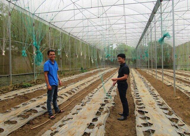 Hiện tại chàng trai trẻ Dương Văn Khoa đã lắp đặt hơn 1.000m2 nhà màng để trồng dưa vàng