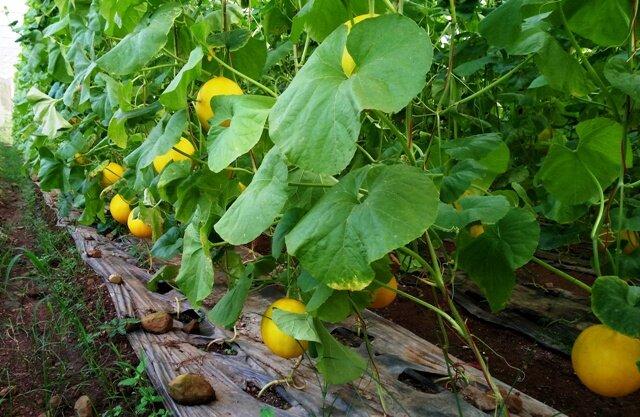 Dương Văn Khoa hướng tới làm mô hình nông nghiệp cao cho ra sản phẩm an toàn