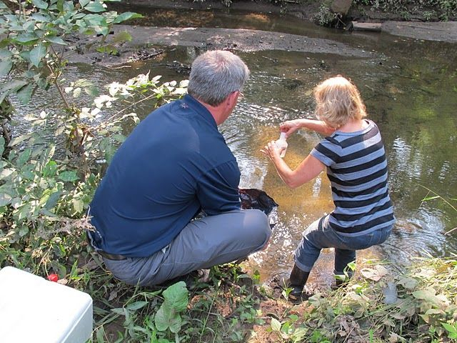 Everyone can help monitor our creek