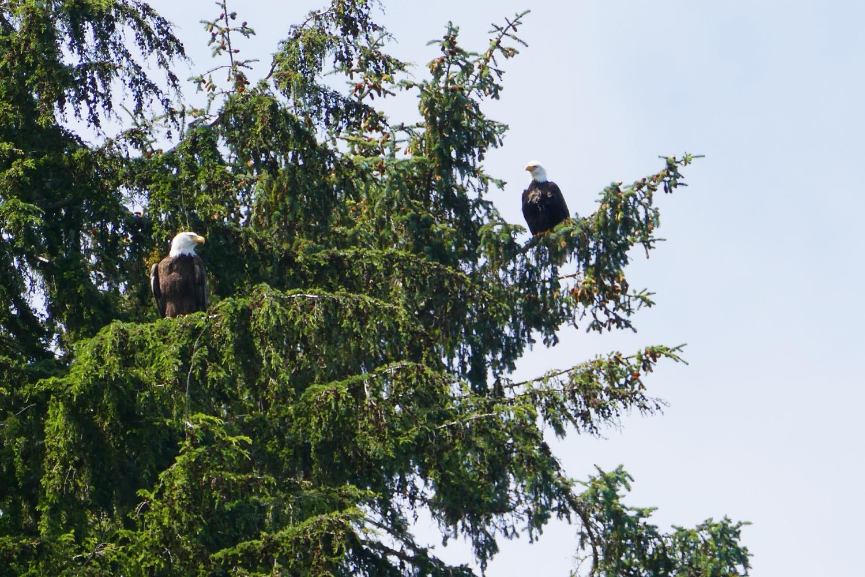 IMG_4514_eagles.jpg