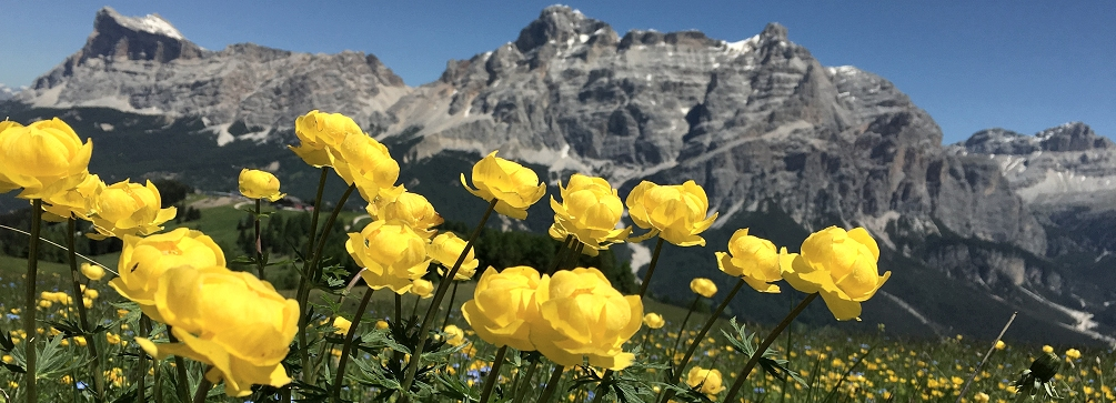 mhh_home_slide_image_flowers_abo_pralongia_16_1005x363.jpg