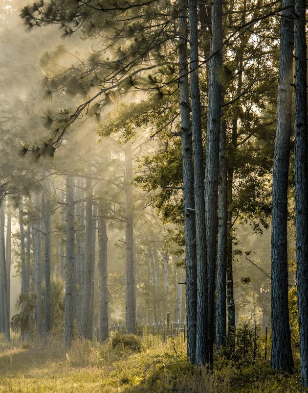 - Pines at Sunrise, Florida