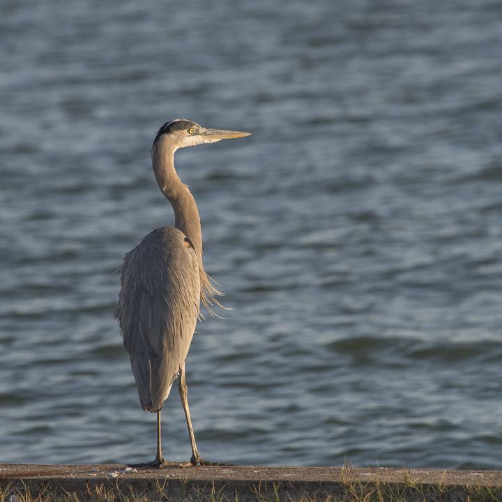 bw_20121130_Goose Island Birds_041.jpg