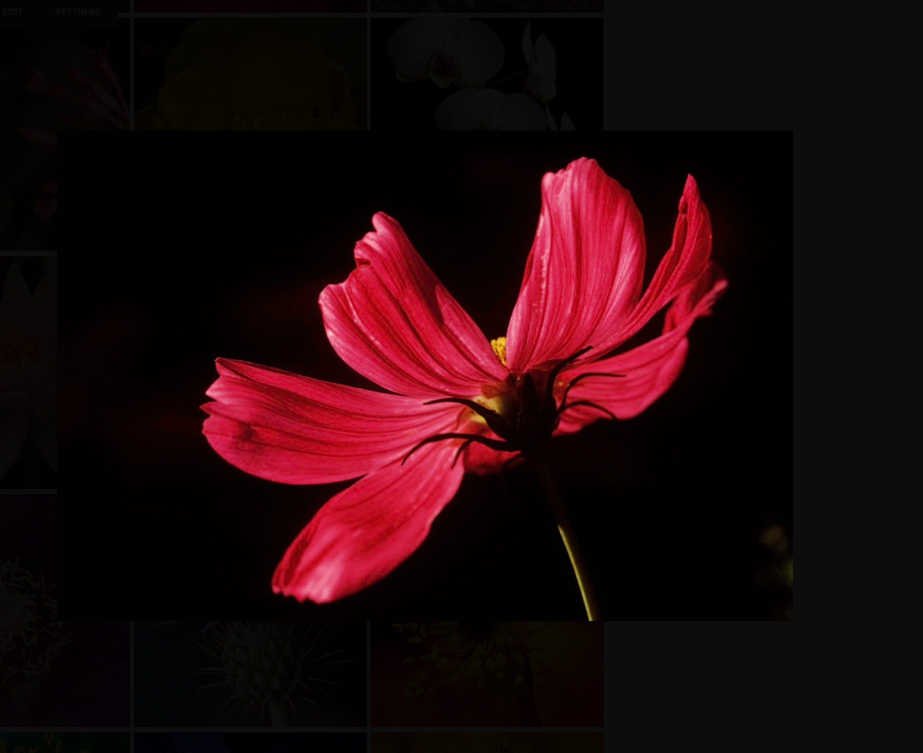 AW Red Flower - Side View.png