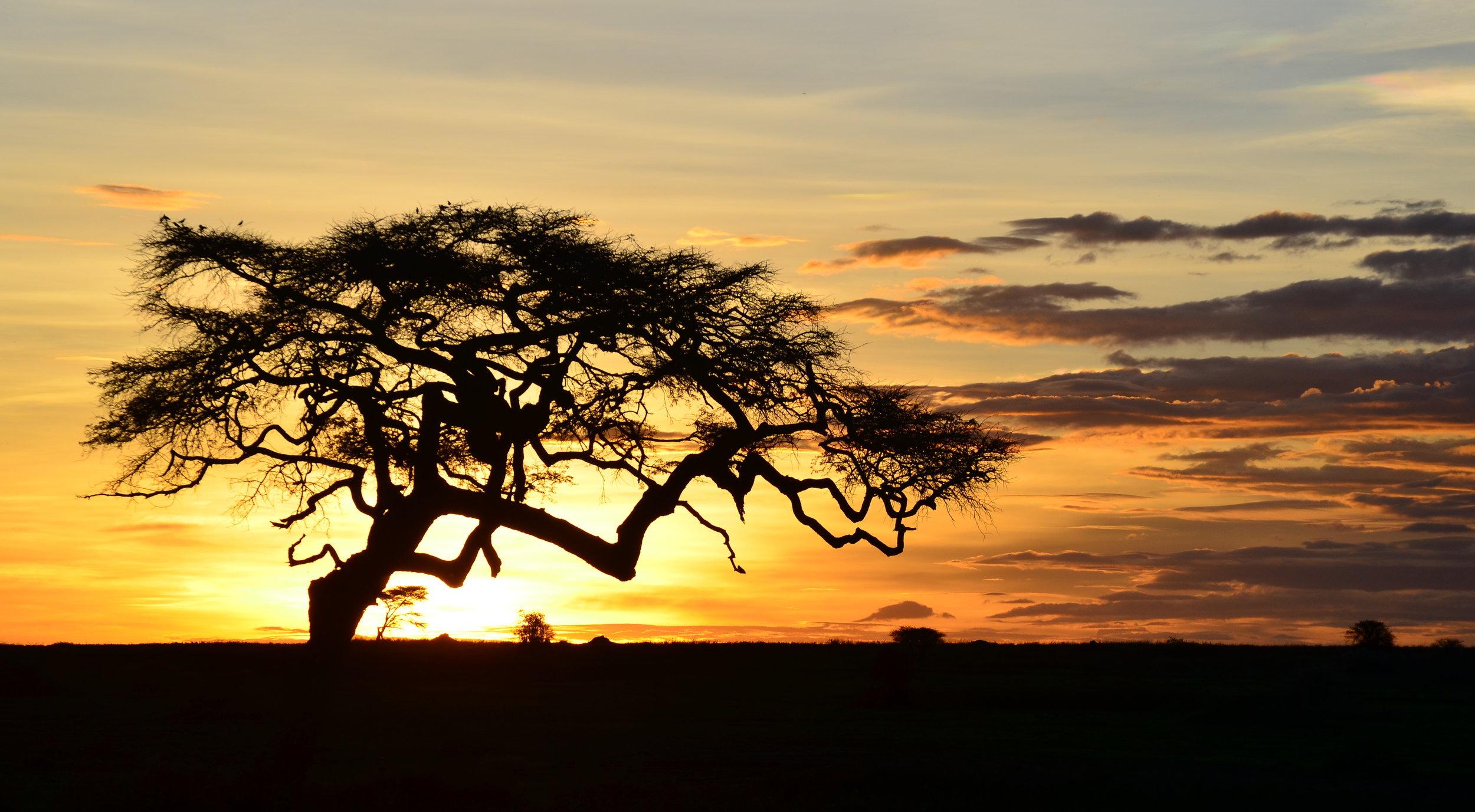 African Footprint Safaris Tanzania