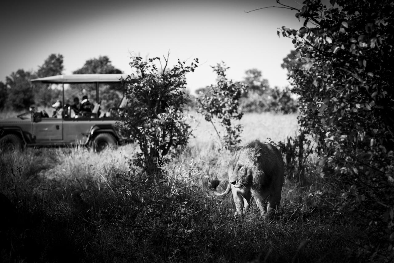 African Footprint Safaris - African Safari.jpg