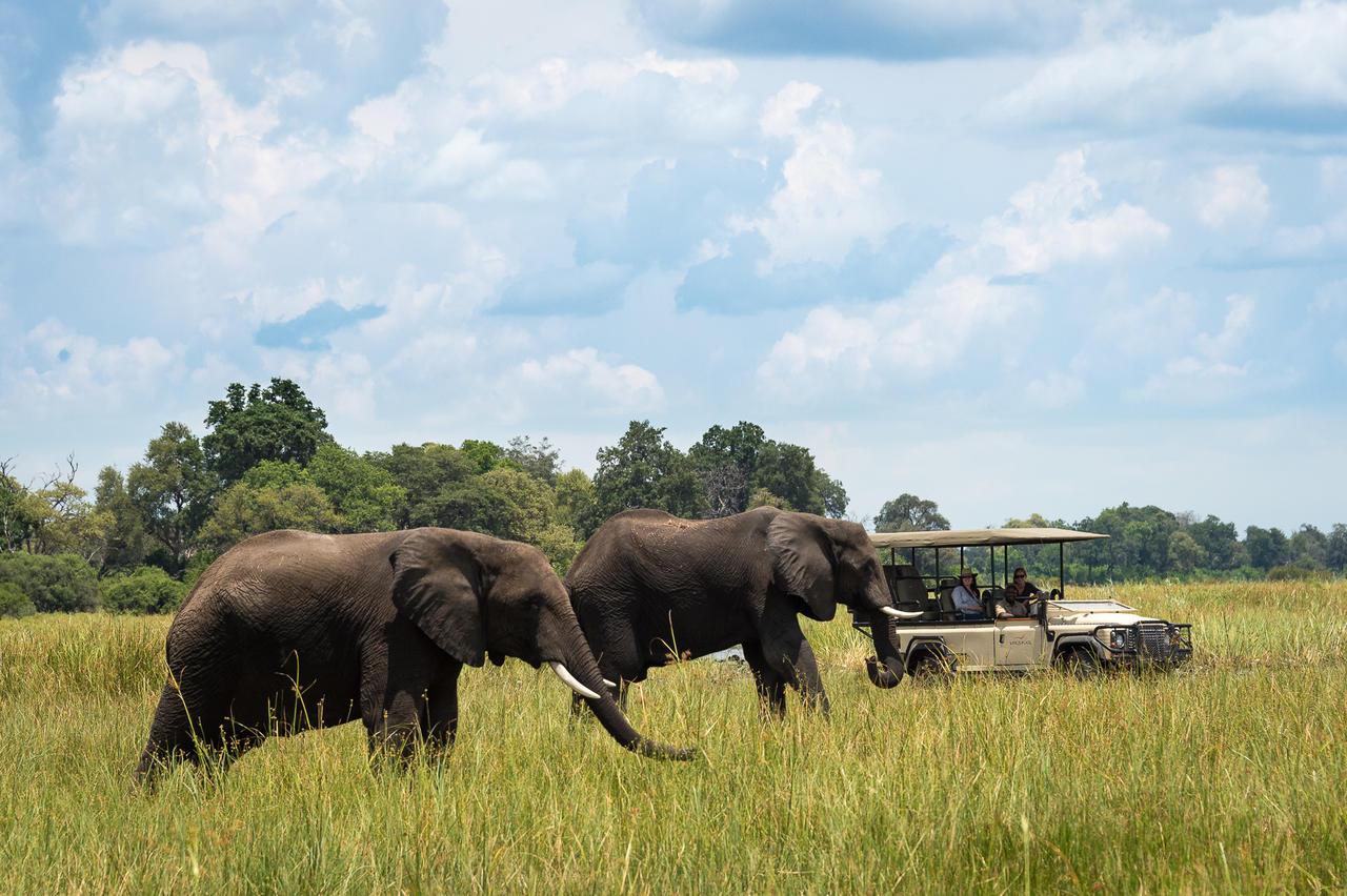 African Footprint Safaris - Safari.jpg
