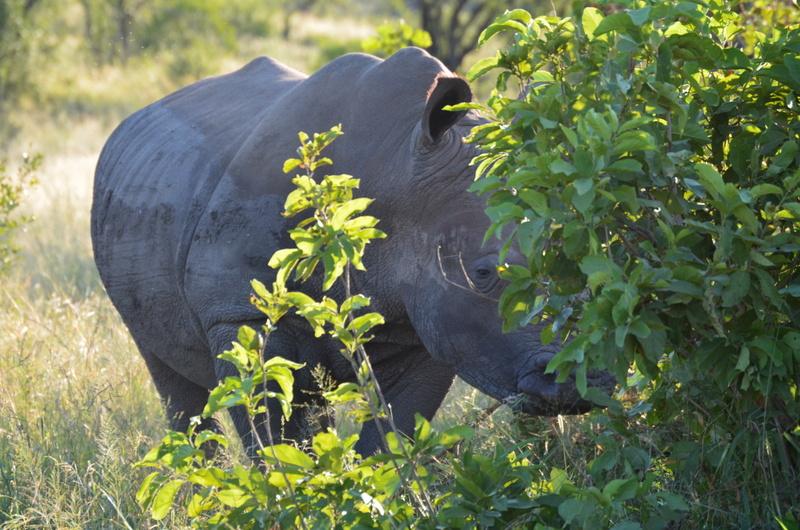 African Footprint Safaris - Rhino.JPG