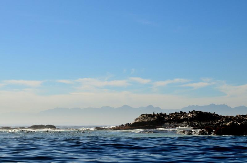 African Footprint Safaris - Seal.JPG