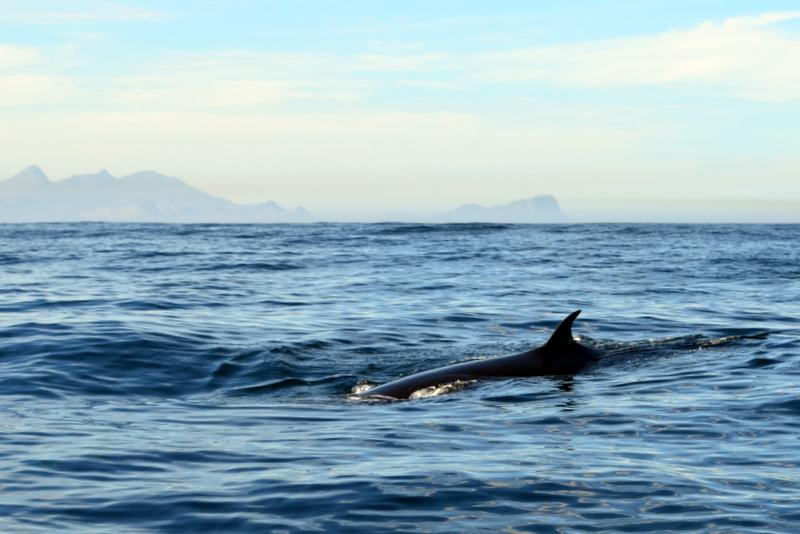 African Footprint Safaris - Whale.JPG