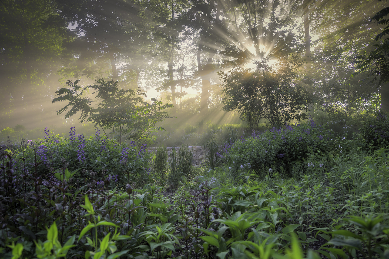 Bragg_Hill_Garden_Sunrise.jpg