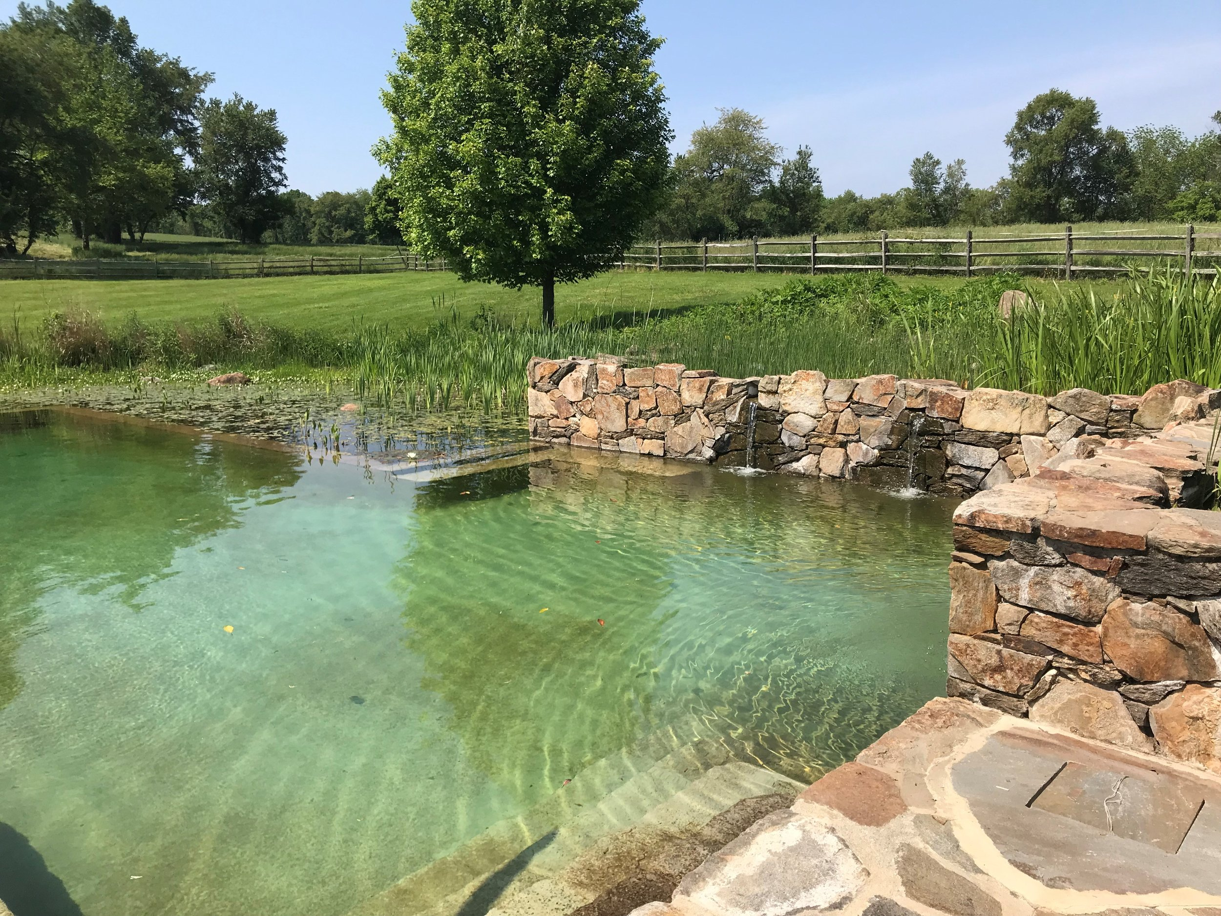Natural Swimming Pool — Jonathan Alderson Landscape Architects