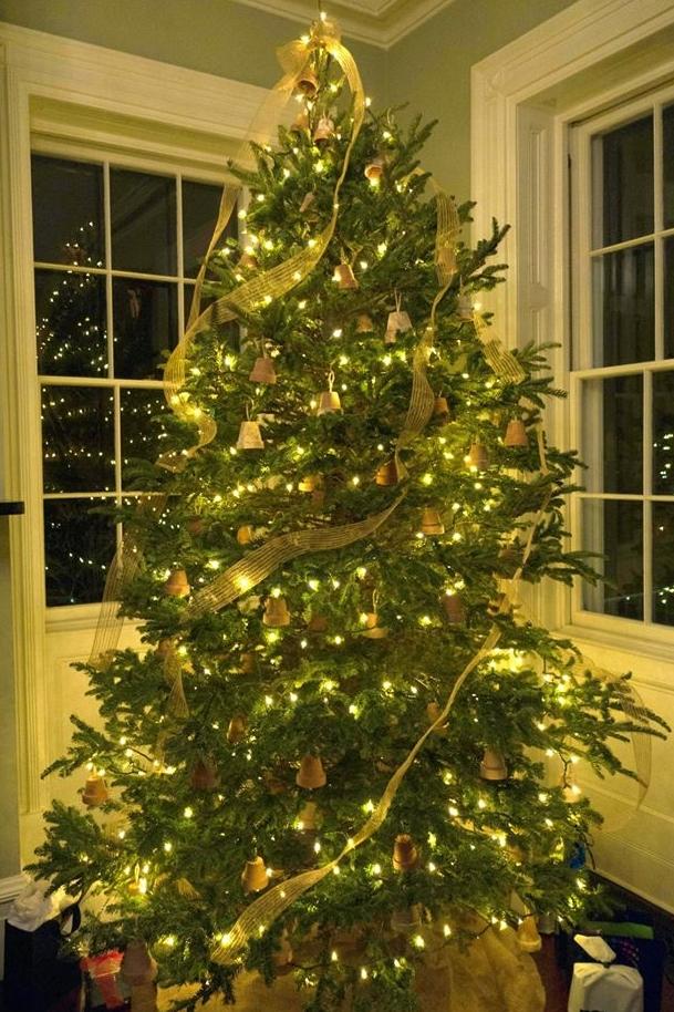 christmas tree pots.jpg