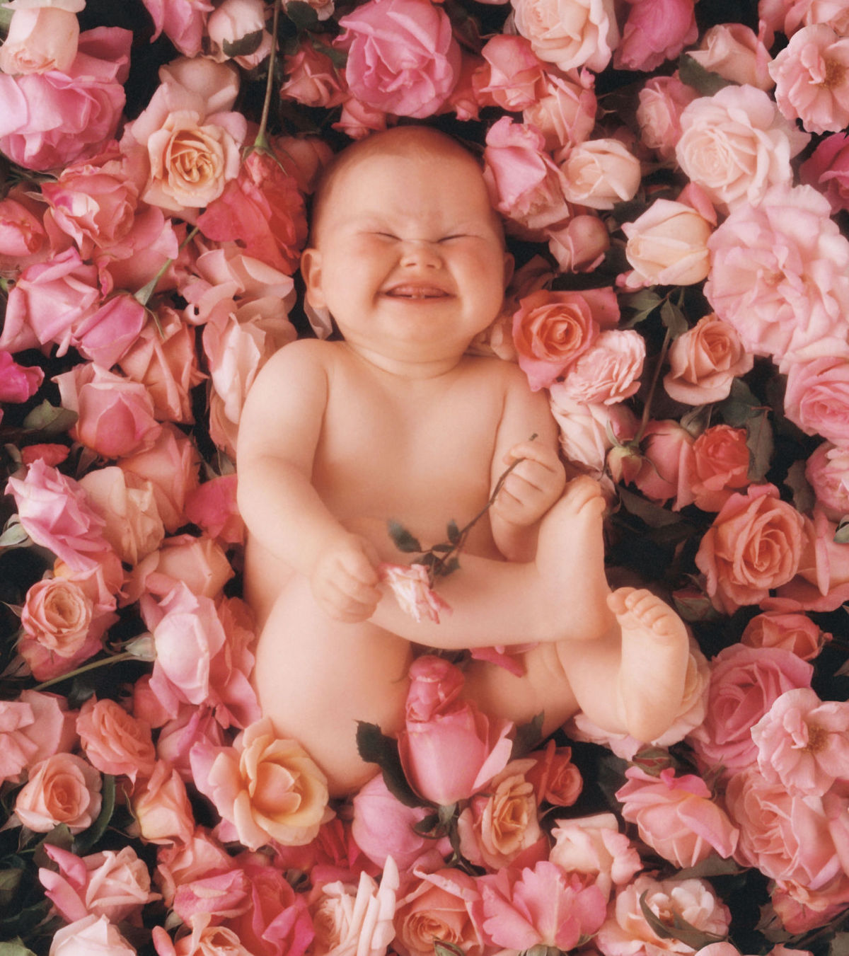 Phillipa on a bed of roses in 1992. Photo by Anne Geddes