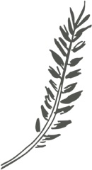 Fern+Favicon+copy.jpg