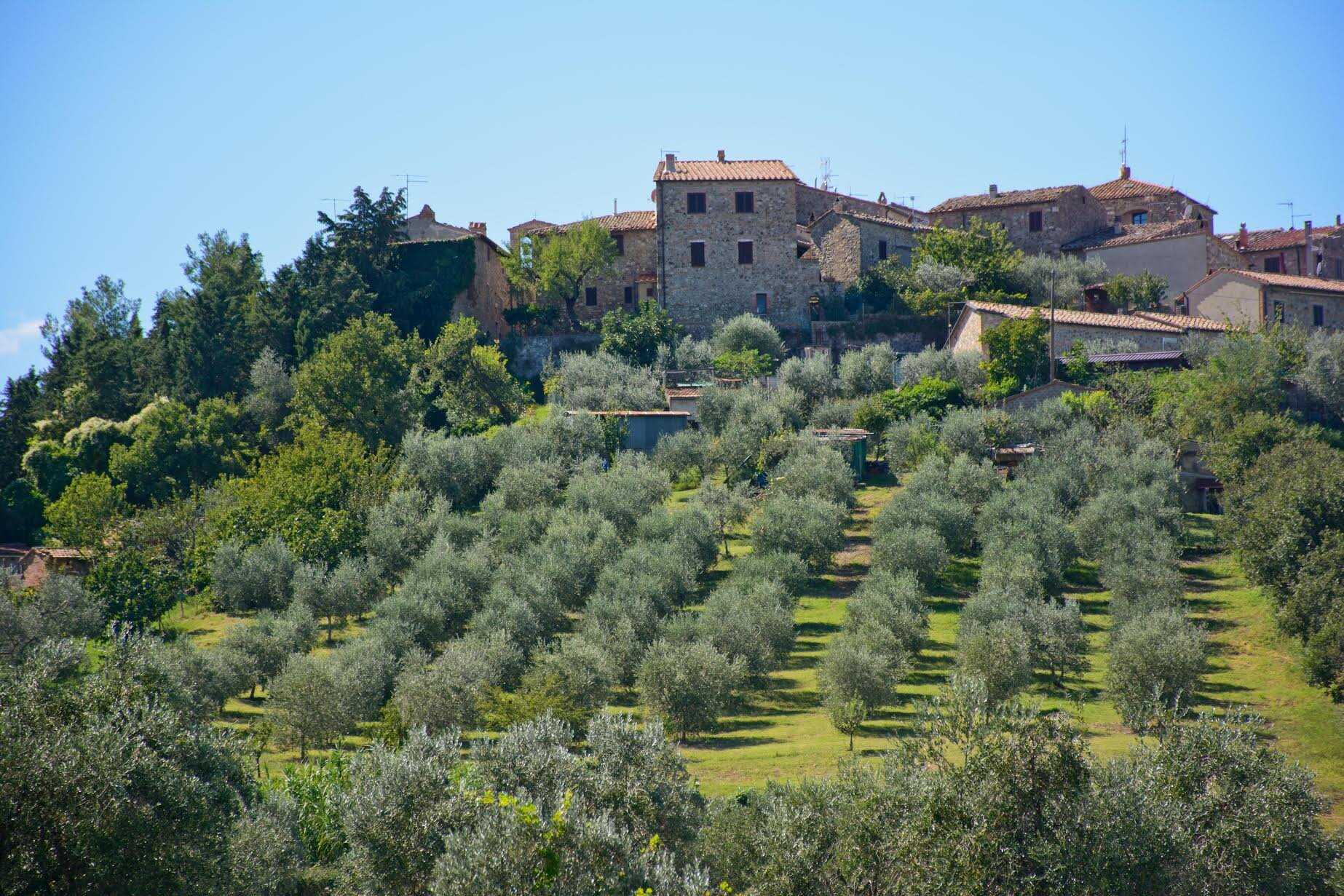 Village of Contignano behind Giuseppe's olive orchard. Oh I'm seeing so many painterly views!
