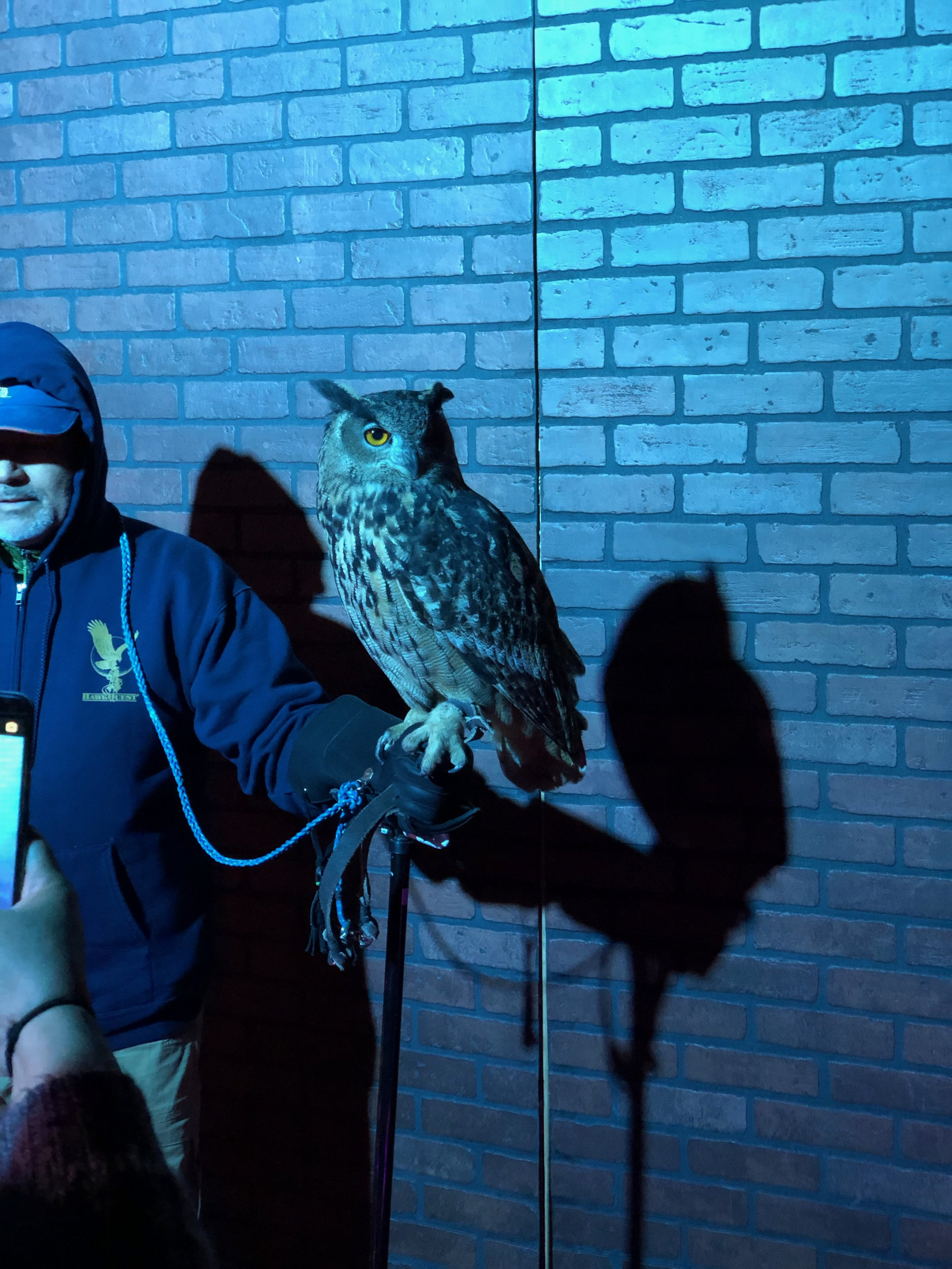 Aarica was there for the owls though, really.