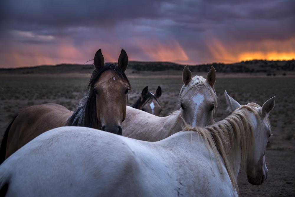 INT_horsesinUtah_HeadingtoLA_Sept2016_RJN-8830.jpg