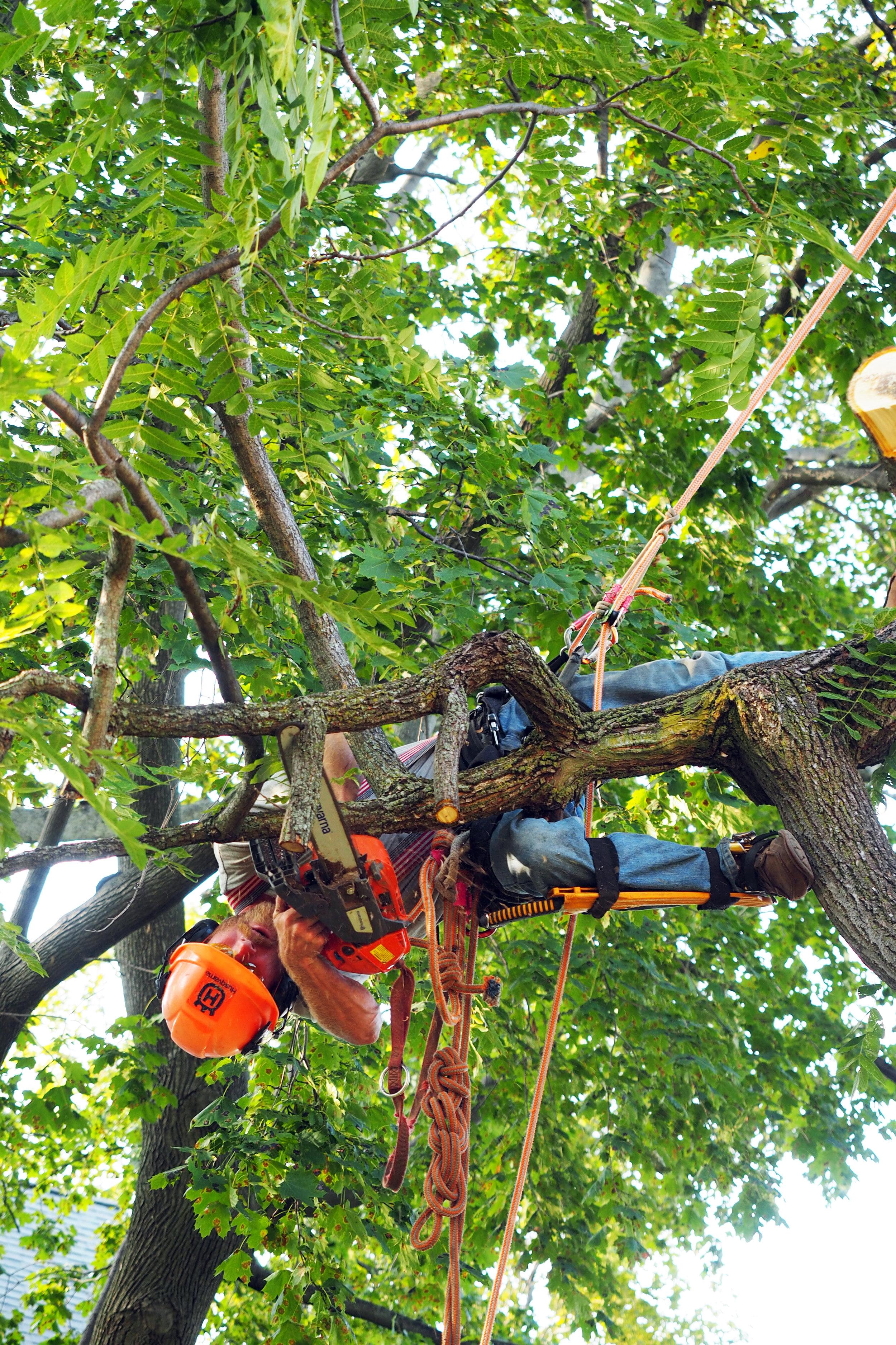 _._nice pruning1use this pruning.jpg