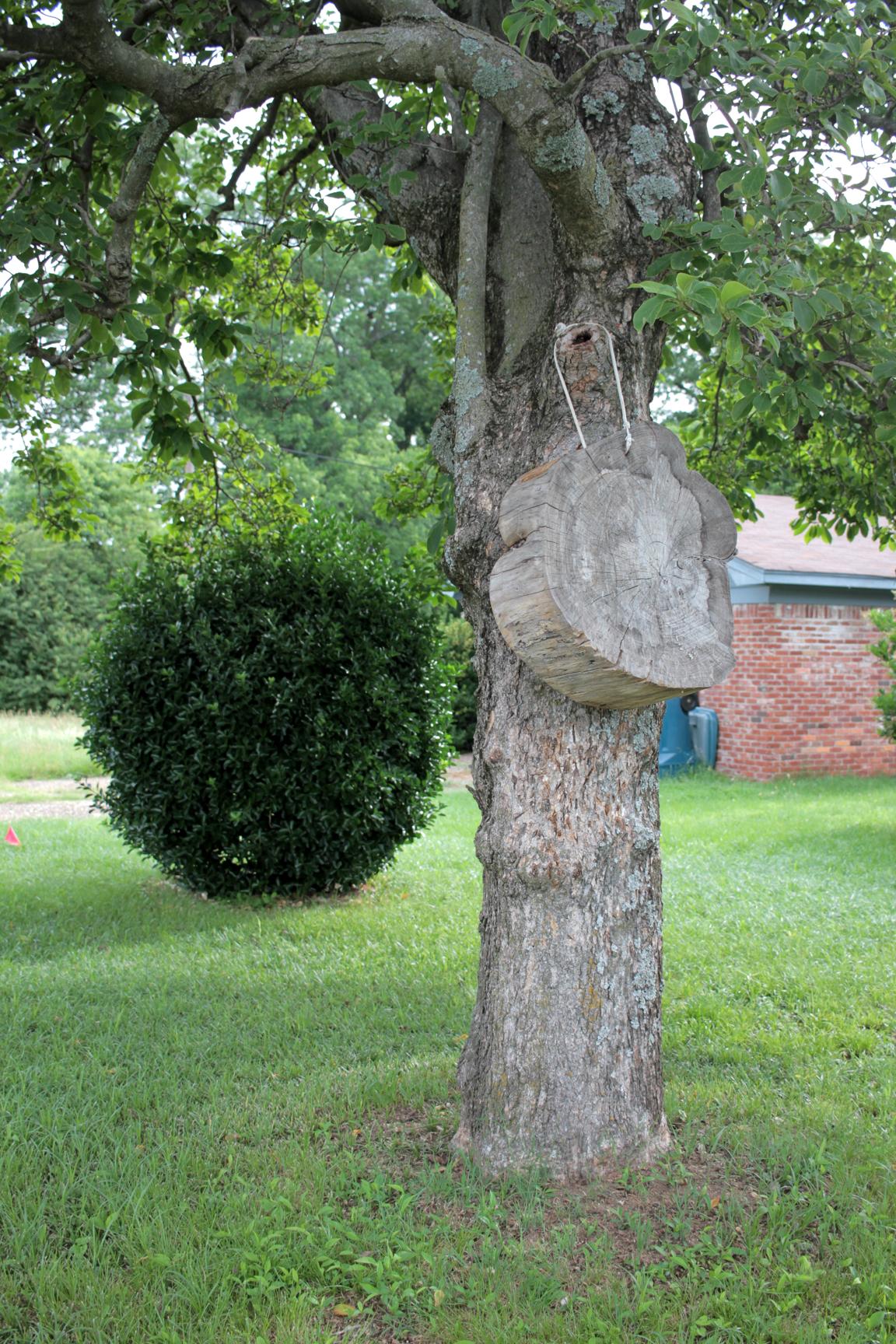 tree-in-tree.jpg