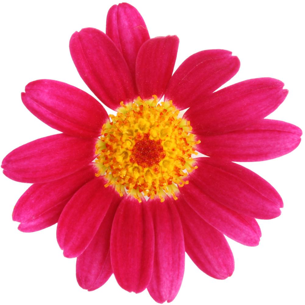 FlowerPink.png