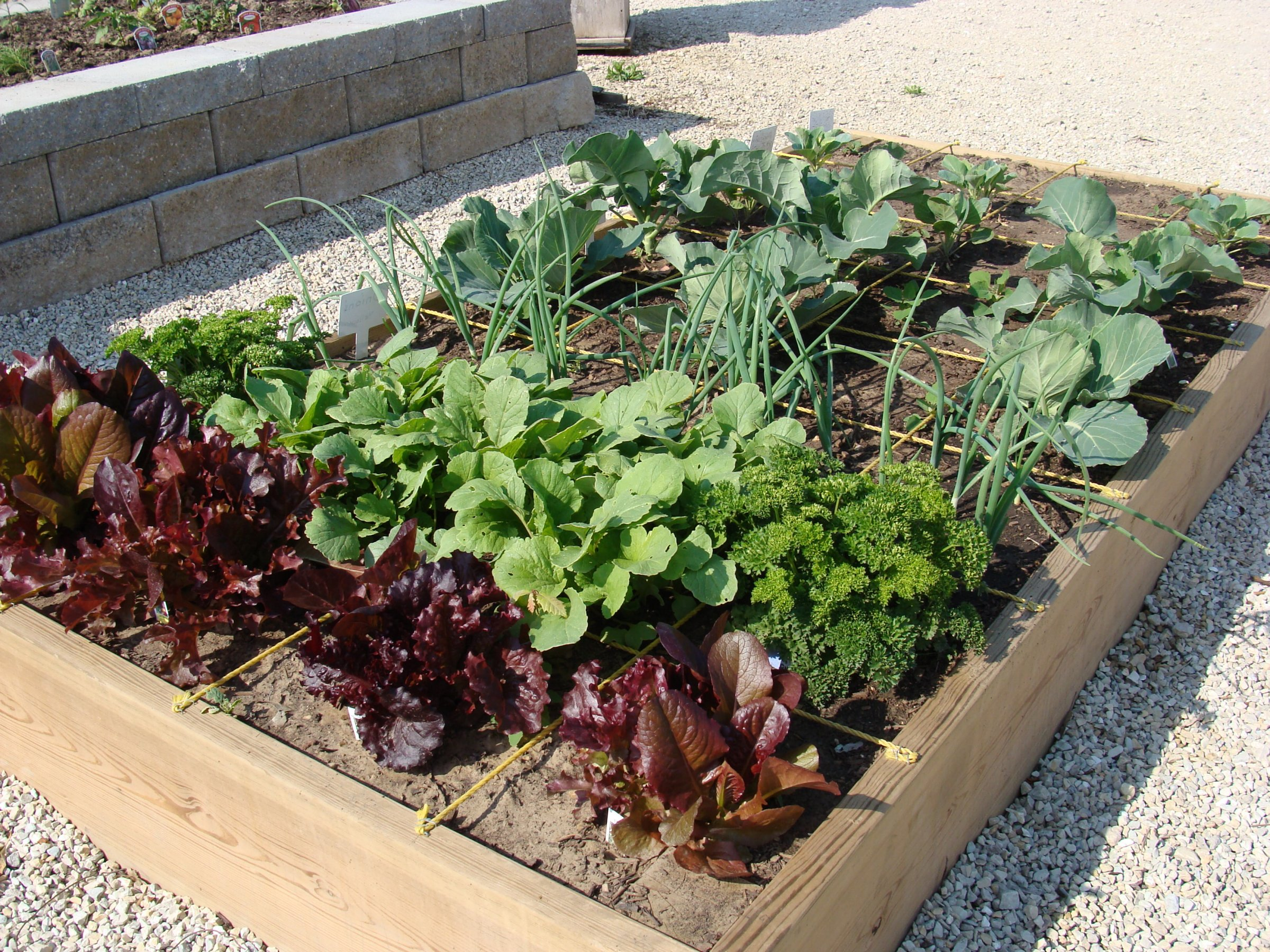 Square Foot Veg Garden - HNF