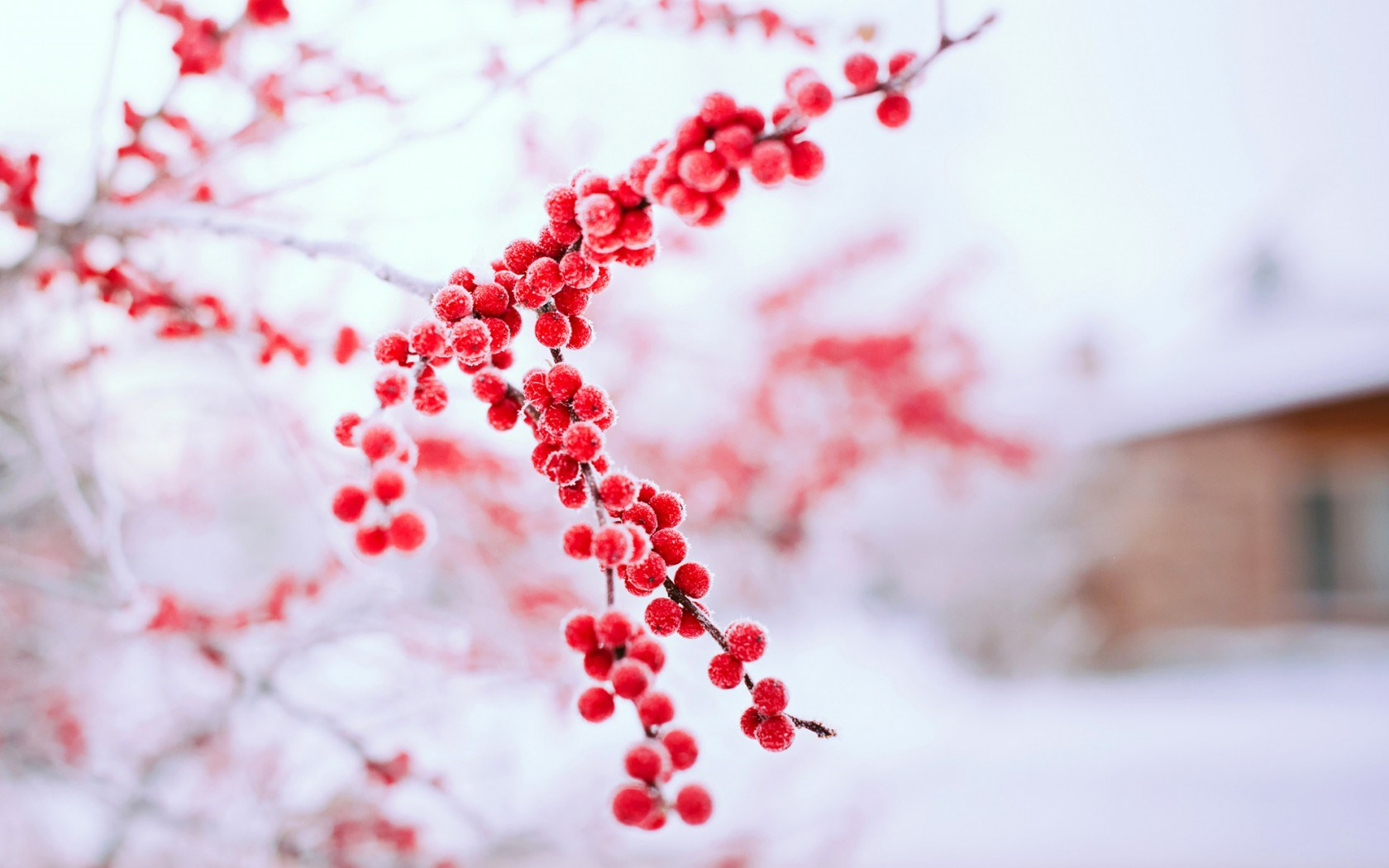 Winter_Berries_Branches_w.jpg