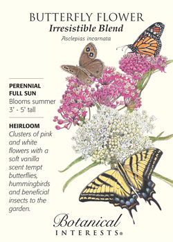 SeedPacks-ButterflyFlower-BI.jpg