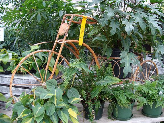 Houseplants_Dis_Tricycle_12-18sw.jpg