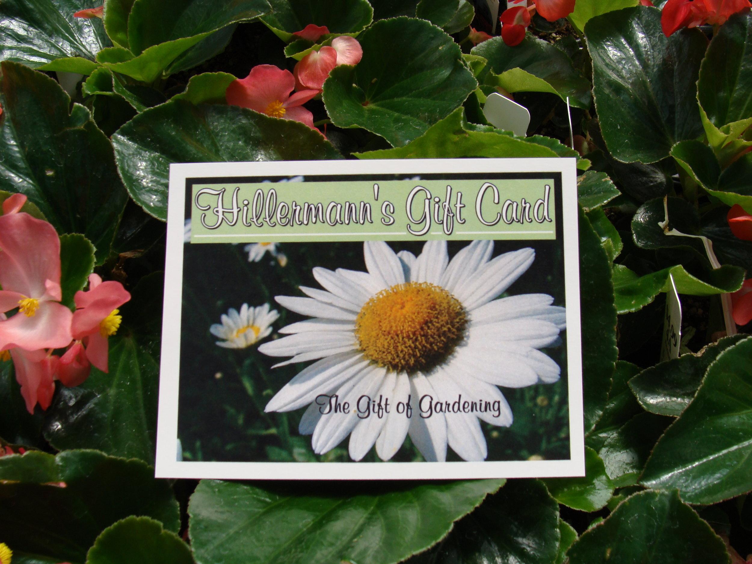 Gift_Card_Begonias_DW.jpg