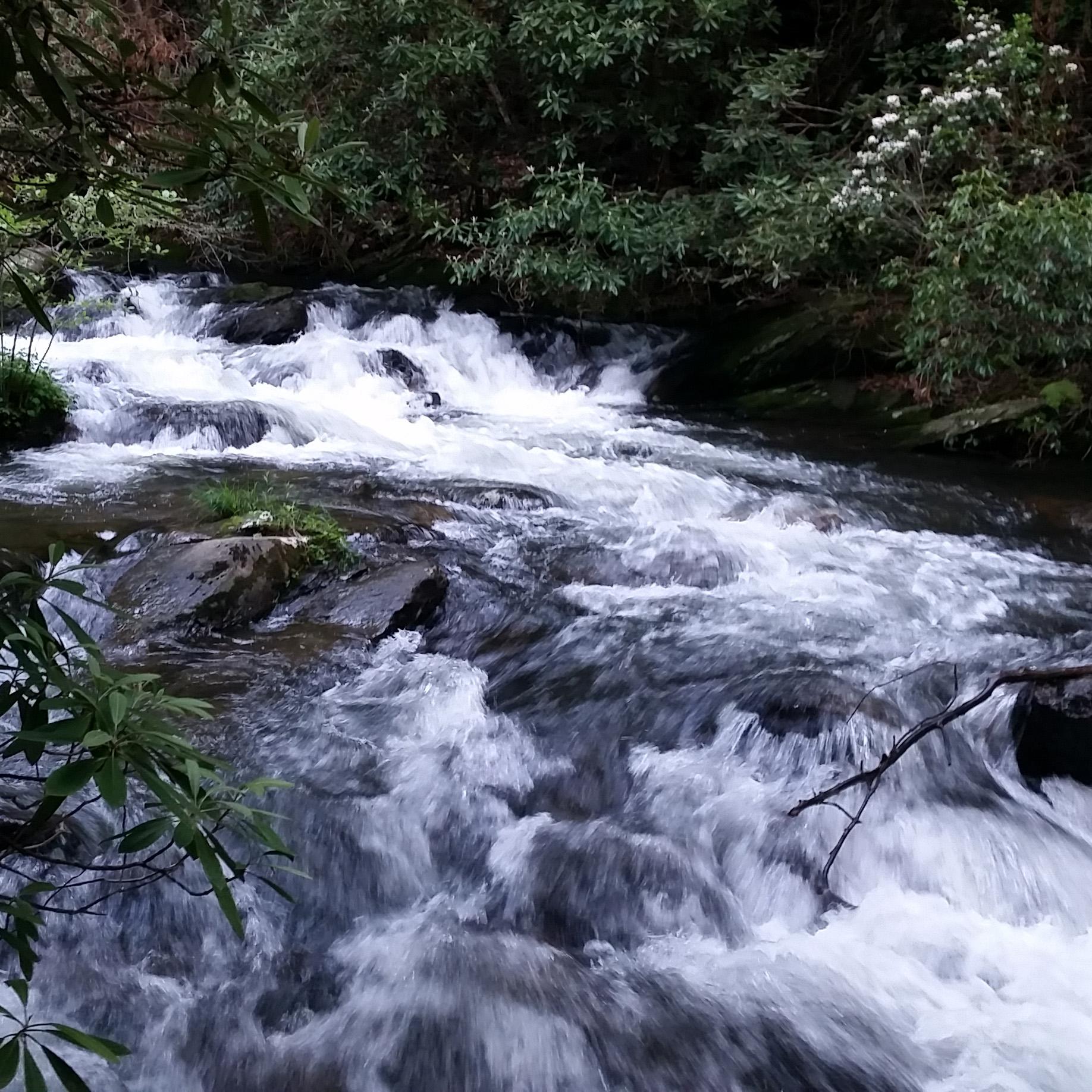 Wilderness Water Essentials.jpg